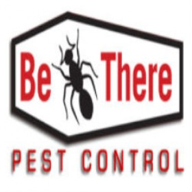 Get Best Ant Pest Control Service in Minneapolis