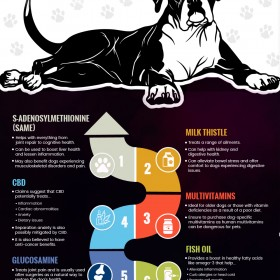 10 Common Dog Supplements