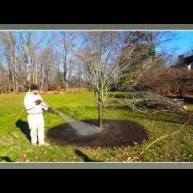 Organic Lawn Care Services in Fairfield, CT