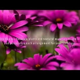 Flowers & Sympathy - Miami Funeral Arrangements & Sympathy Flowers Online