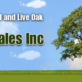 Looking for Oak Trees in Austin, TX?