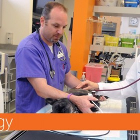 Importance of Veterinary Cardiology for Your Pets