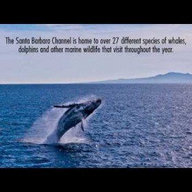 Your Adventure Awaits! Condor Express Whale Watching