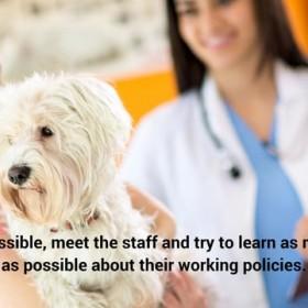 Tips For Choosing The Right Vet - Metropolitan Veterinary Center