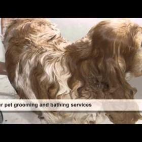 Veterinarian Hospital in Jacksonville, FL - Argyle Animal Clinic
