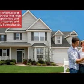 Quality Pest Control Services - Apex Pest Control