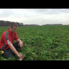 Cover Crops Pay! Valmar| Salford Seeding | Fennig Equipment
