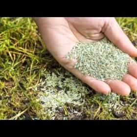 Fertilization Aeration & Seeding Services in Charlotte