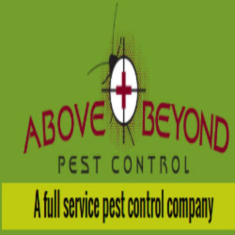 Get Personalized Termites Treatment in Wellington, Florida